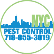 NYC Pest Control | Brooklyn